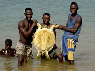 Fishermen releasing a green turtle after
