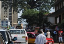 This giant cotton tree which dominates downtown Freetown, Sierra Leone was very important to former slaves who returned to Africa in the late 1700s and early 1800s. They had to symbolically touch the tree to know that they were truly free of slavery. Freetown was set up as a refuge for former slaves, some of whom returned there from homes in Nova Scotia in the late 1700s. — Image Credit: Frank Bucholtz/Langley Times