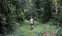 Gola rain Forest (Sierra Leone)-file photo